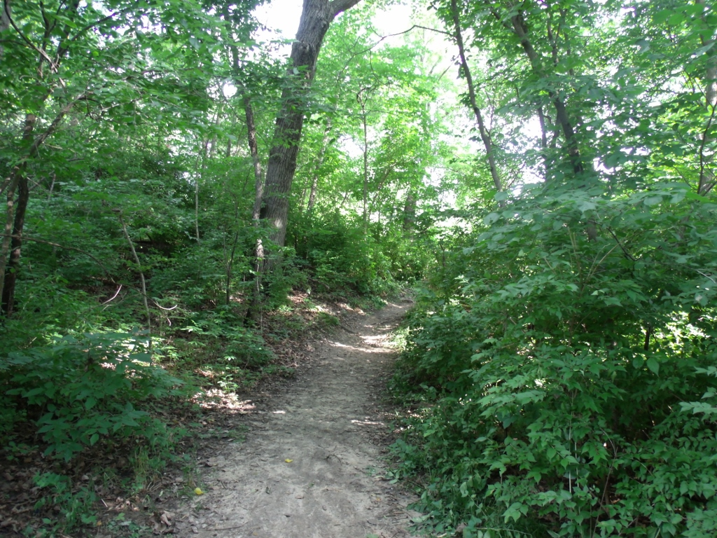 Forest Trail by Myrddin88