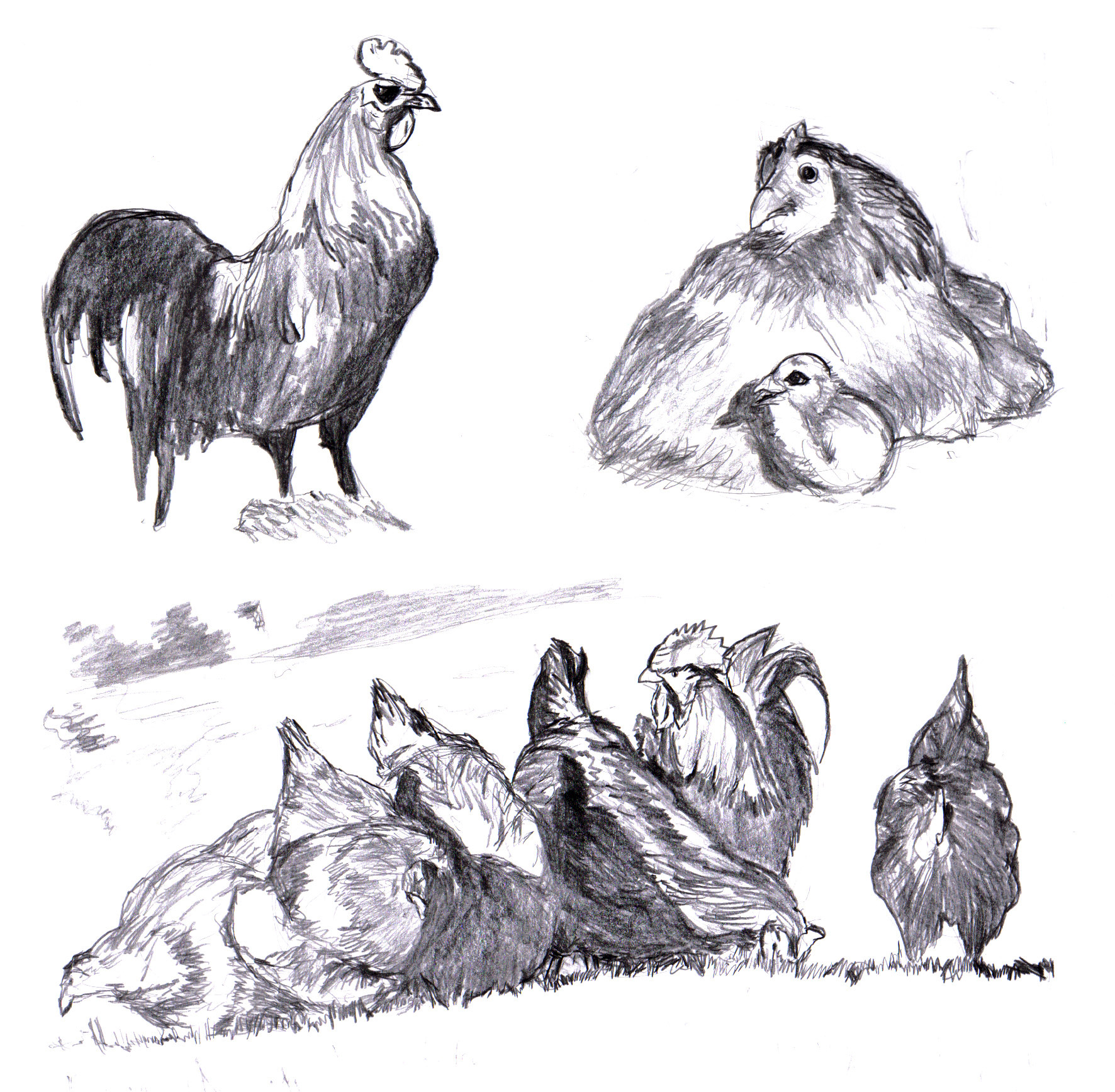 Image Result For Rooster Coloring Page