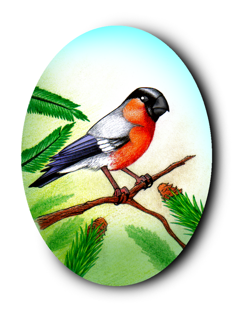 Bullfinch by Galejro