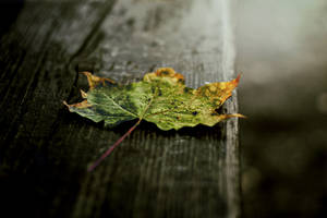 Autumn leaf2