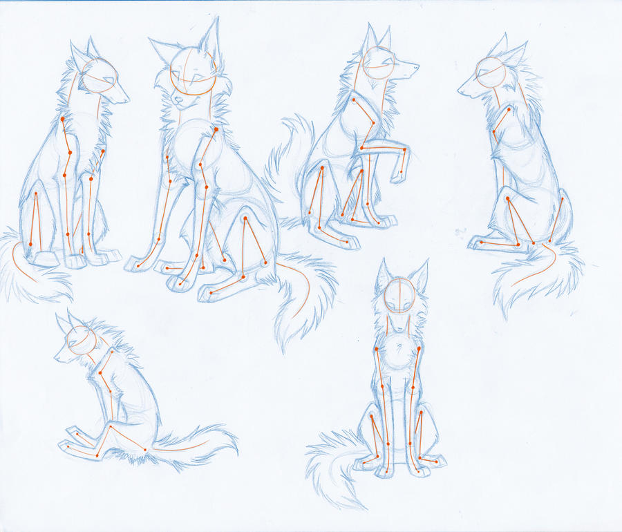 HowToDrawWolves: SittingPoses by Kimai on DeviantArt