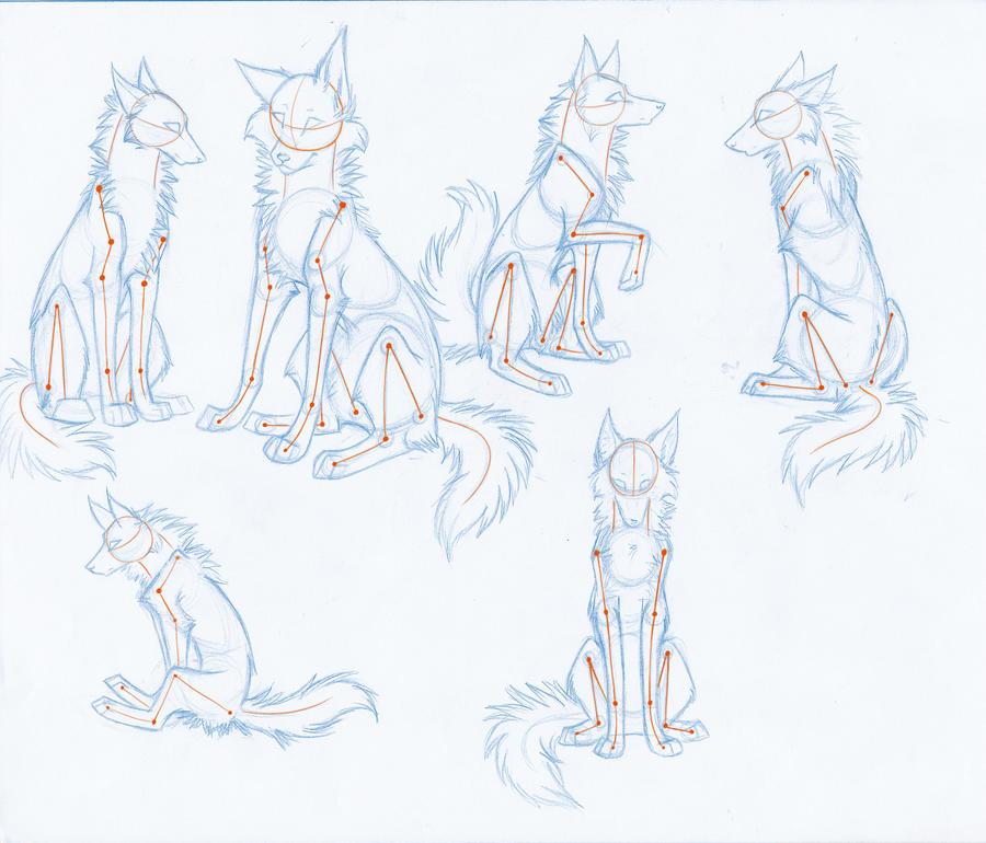 Forum Wolf Anatomy Help Deviantart