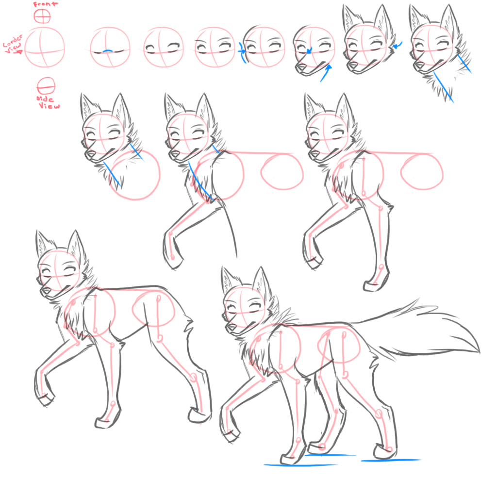 How To Draw Canines By Kimai How To Draw Wolf Legs How To Draw Wolf Legs