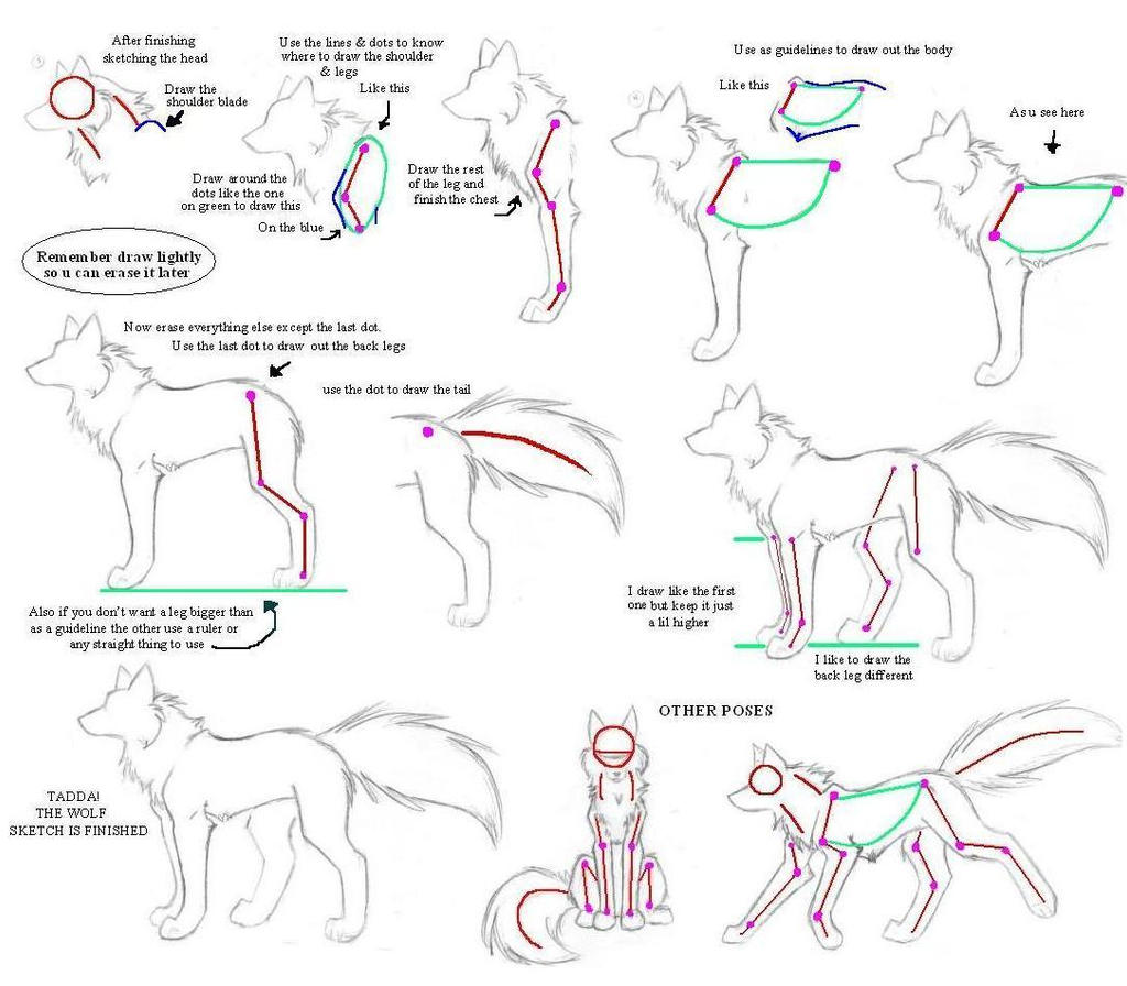 How to drw wolves part 3 body by kimai on deviantart for Cartoon body tutorial