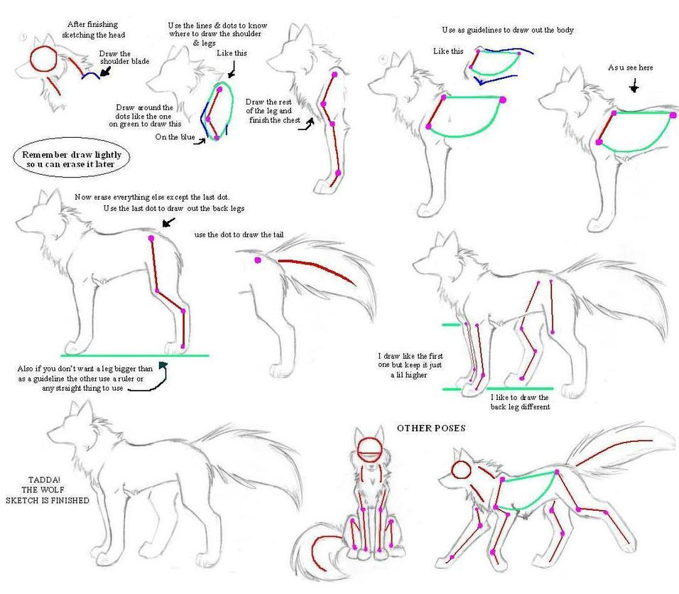 How to draw a wolf body - photo#2