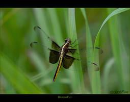 DragonFly by bmshaffer