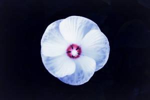 Blooming Ghost by SoothSheeper