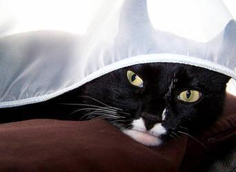 Hide and seek... by Ellie-2607