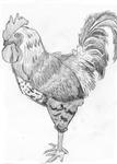 It's A Chicken, Eddy