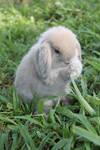 Bunny Bunny 2
