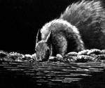 Squirrel Drink by Lambieb123