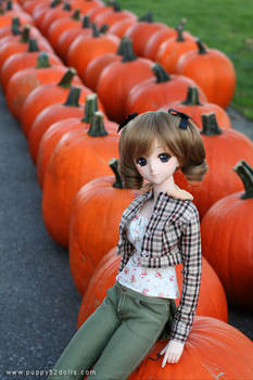 Aki and pumpkins :D