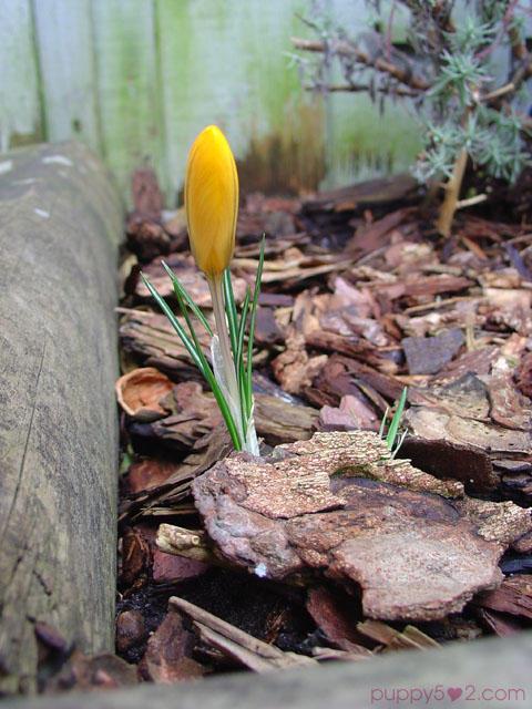 urgency of spring by chun52