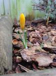 urgency of spring