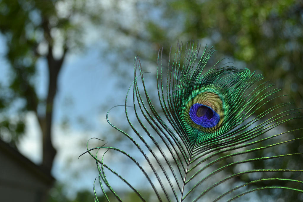 Peacock Feather by PhantomDragon09