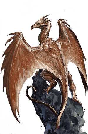 Young Copper Dragon