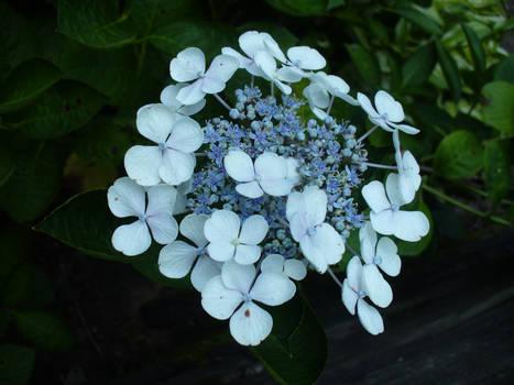 Blue Cluster
