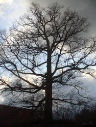Tree of Death, Redux by funwes