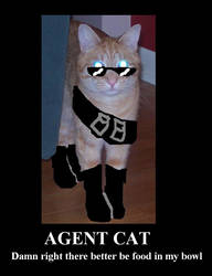 Agent Cat by Setsuaiburninglove