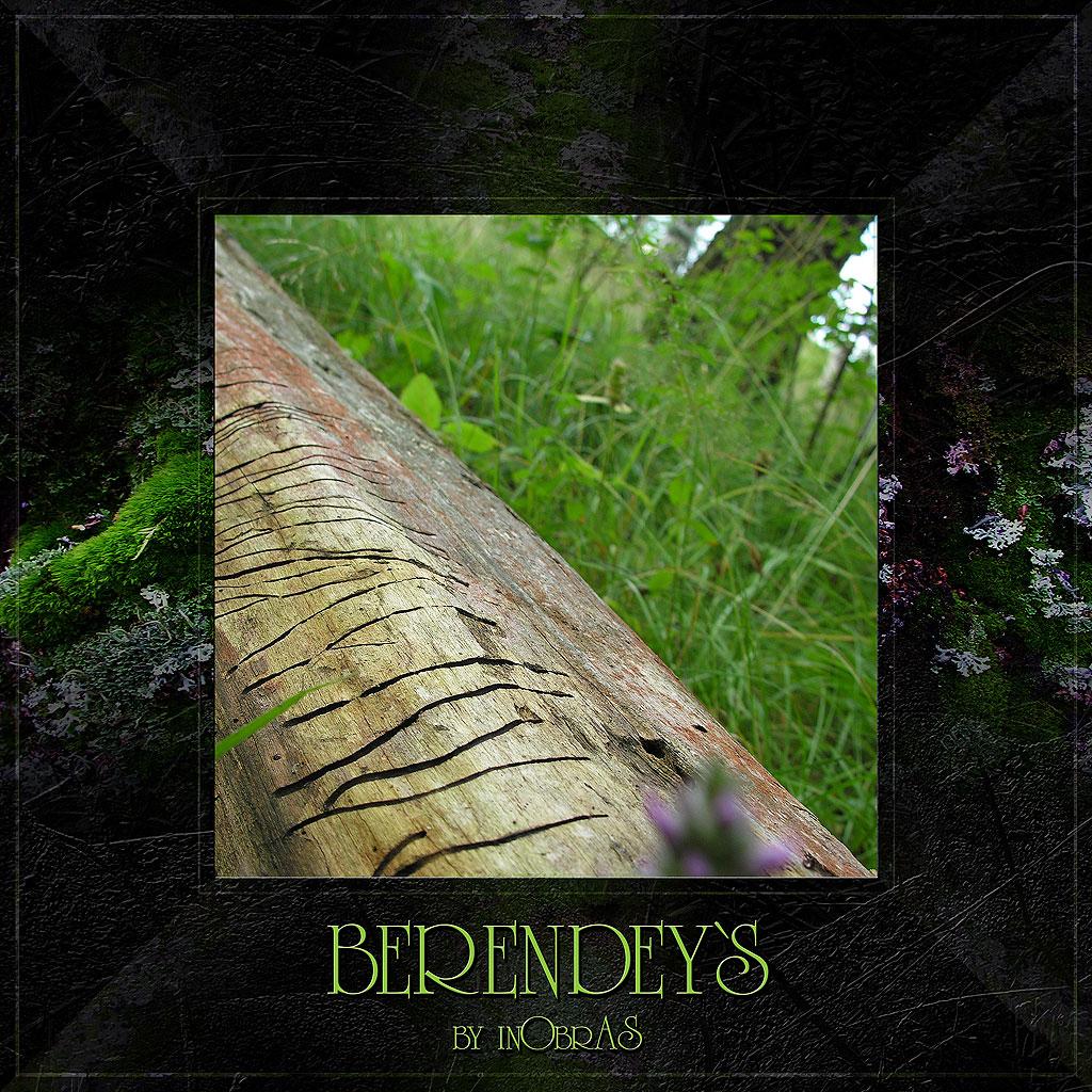 Berendeys 13 by inObrAS