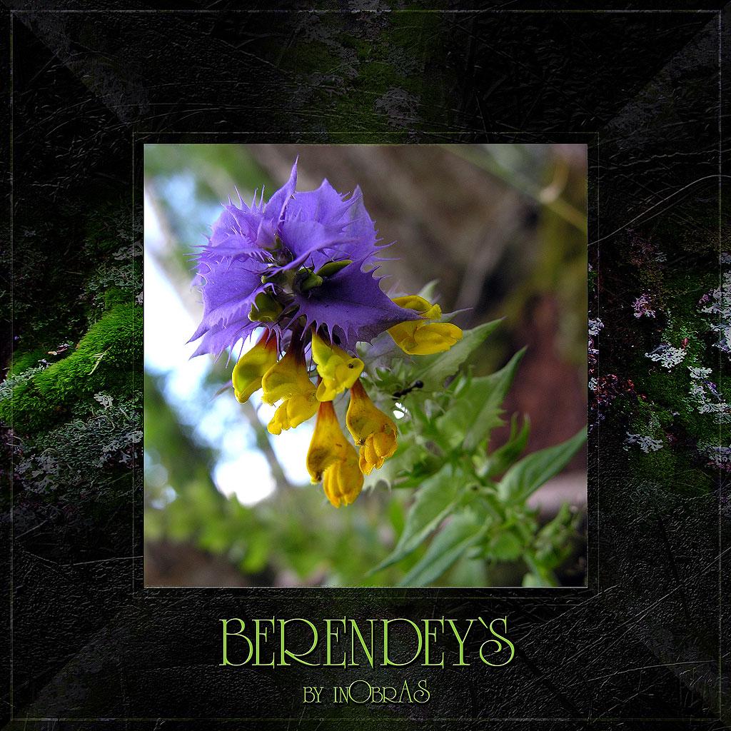 Berendeys 14 by inObrAS