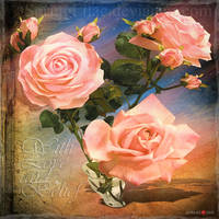 Bouquet for Vera by inObrAS