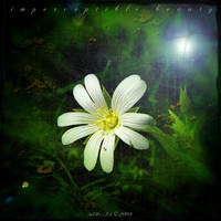 Imperceptible Beauty by inObrAS