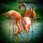 Flamingo by inObrAS