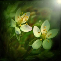 Imperceptible Beauty 3 by inObrAS