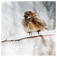 Moscow Sparrow