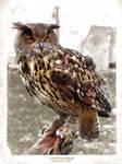 Eagle owl from Czech Sternberk