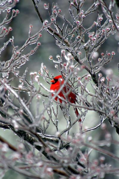 Frozen II by tigeress66