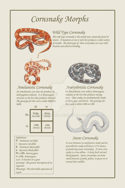Cornsnake Poster By Beccapearl On Deviantart