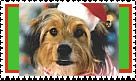 Benji Christmas Stamp by faery-dustgirl