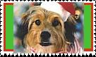 Benji Christmas Stamp by faery-dustgirl
