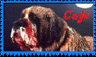 Stephen Kings Cujo by faery-dustgirl