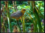 Bird in Iris