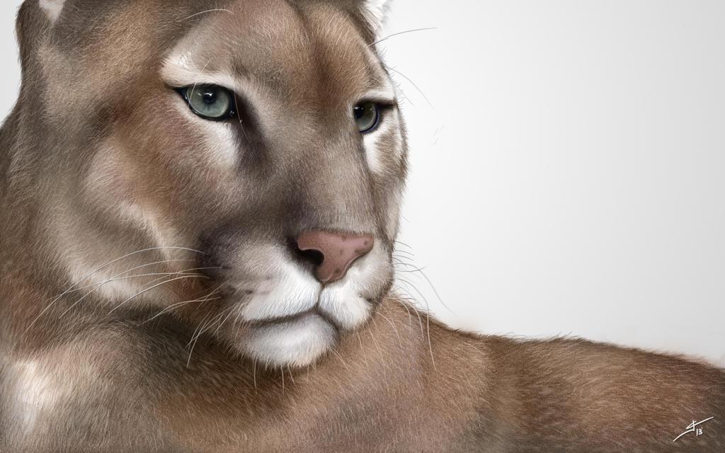 Puma by valhadar