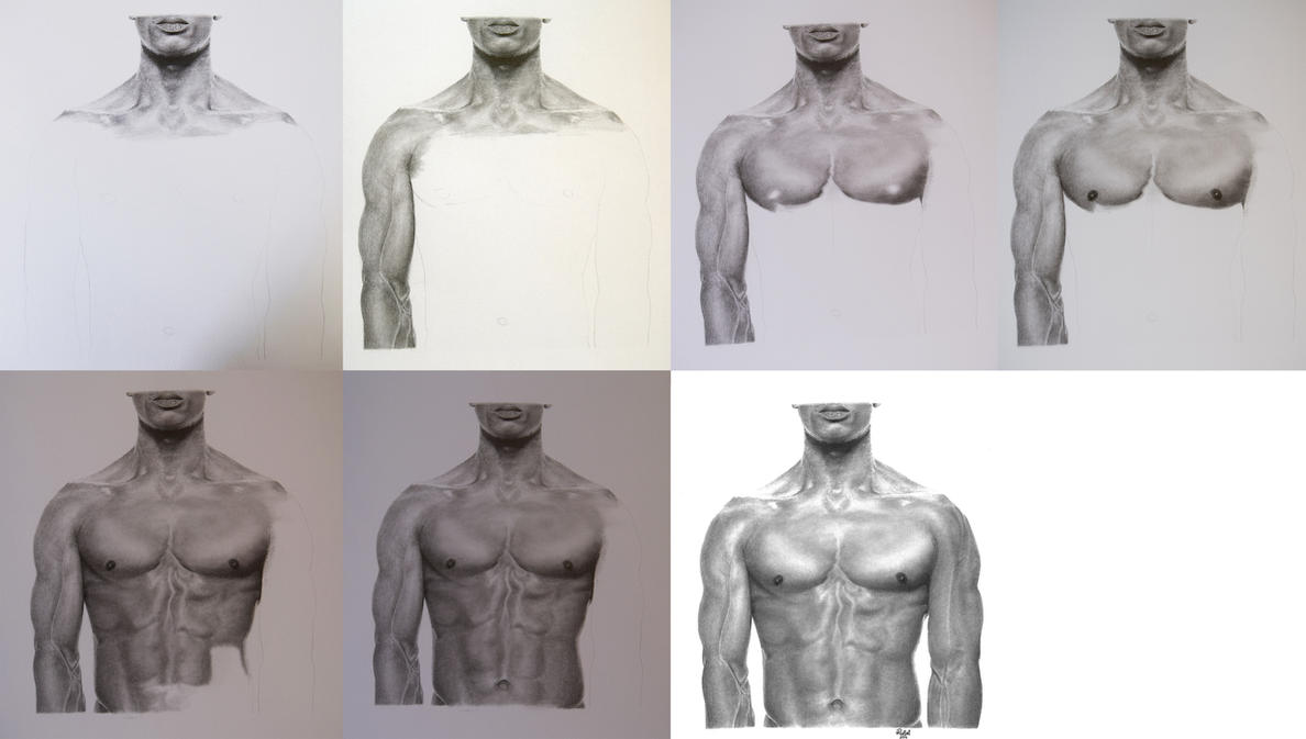 Male torso study - WIP by rotten-ralph on DeviantArt