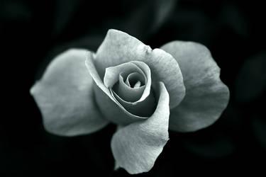its a flower...