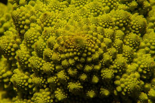 Macrobroccoli 1