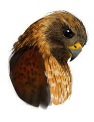 Falcon speedpaint by RedPaints