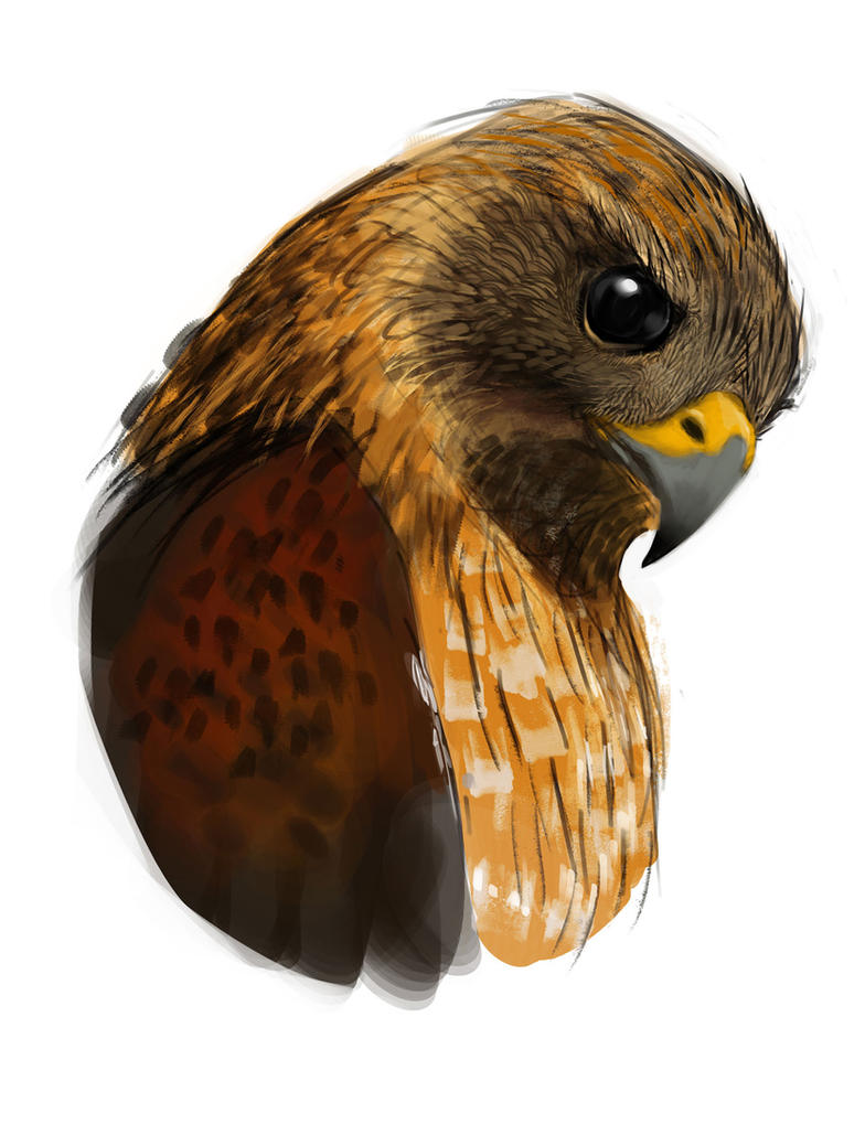 Falcon speedpaint by RedPaints