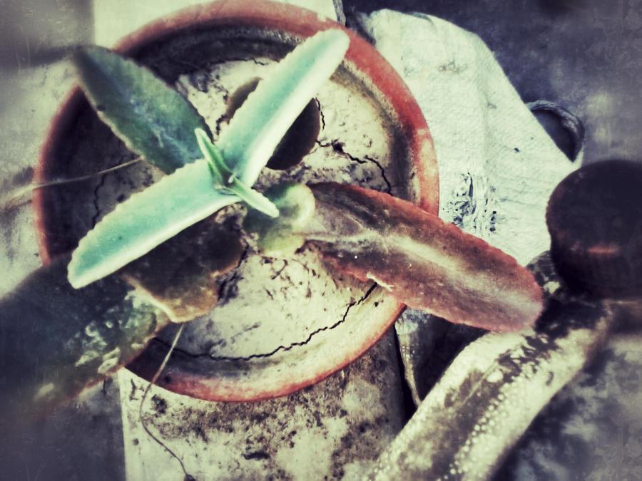 tiny lil plant.. by ani67