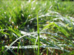 dew drops by bluemacgirl