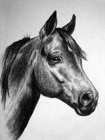 Another Horse Portrait by MelloYello