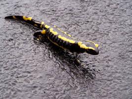 jolie salamandre by krisstetel