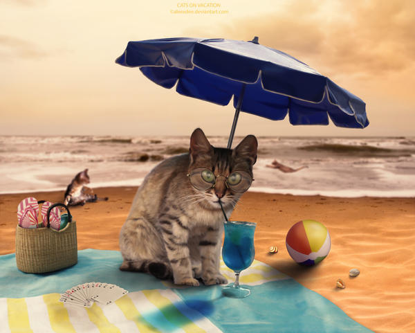 Cats On Vacation by aleexdee