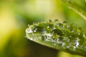 Drops on leaf by aleexdee