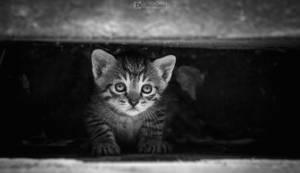 Little kitty hiding